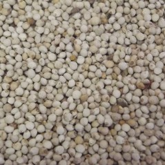 Perilla Blanc au kg - Beyers