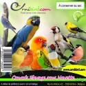Canaris Elevage Sans Navette au kg - Deli-Nature (Beyers) 006380/kg Deli-Nature 2,20 € Ornibird