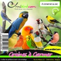 Seeds to germinate in the kg - Deli-Nature (Beyers) 066382/kg Deli-Nature 3,52 € Ornibird