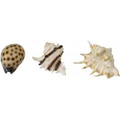 Sea Shell Mix 8,5-10cm - Aqua Della 234/418932 Aqua Della 7,18€ Ornibird
