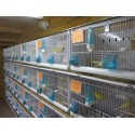 Battery of 12 cages 64x30x34 Model Champion - New Canariz 3000 New Canariz 1,213.80 Ornibird