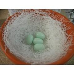 10 Eggs birds plastic 14573 Benelux 1,69€ Ornibird