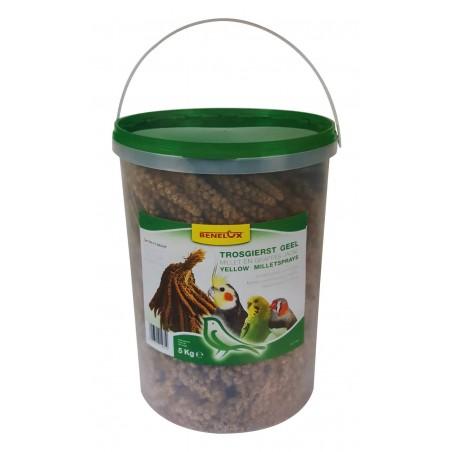 Grappes de Millet Jaune en seau de 5kg - Benelux