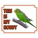 """Sign """"This is my hobby"""" - Budgie"""