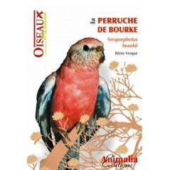 Die Bourke Sittich -, buch-64 seiten - Animalia Editions