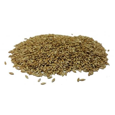 Canary seed Extra kg - Beyers