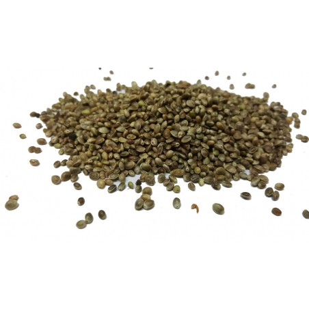 Hemp seeds small format of the kg - Beyers