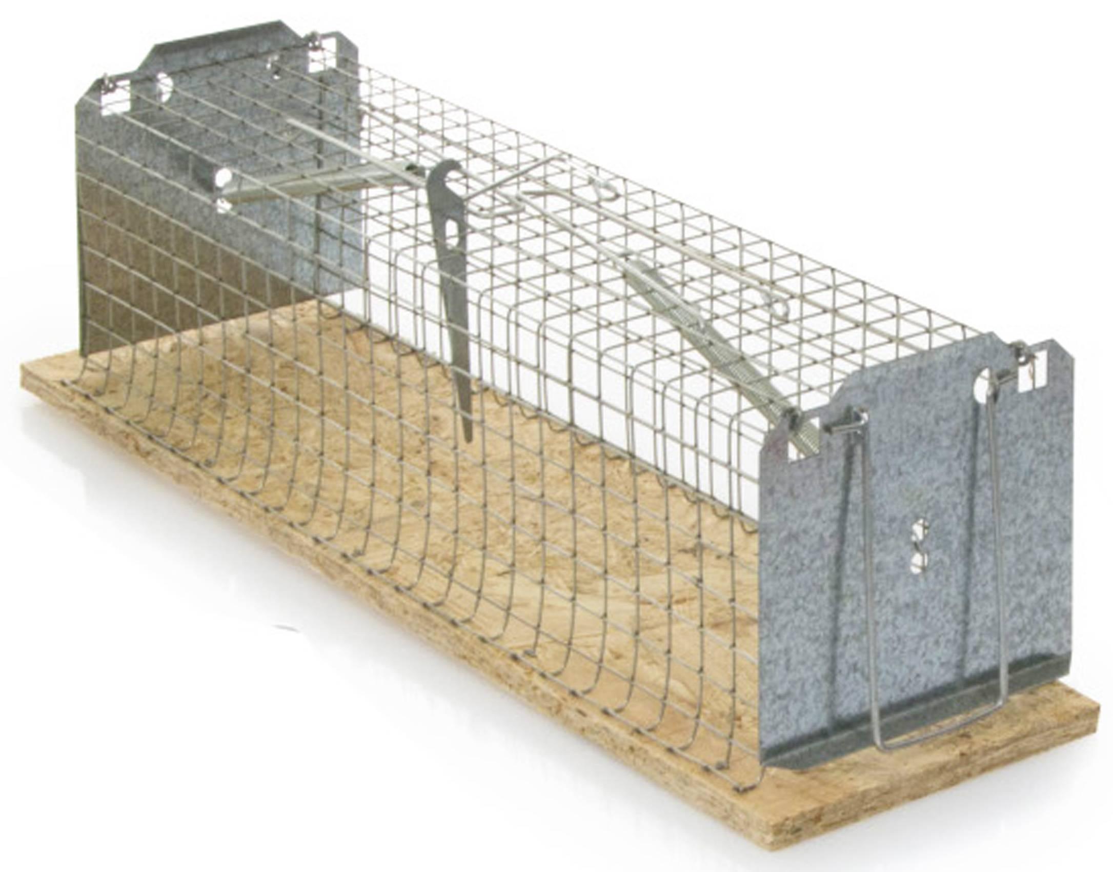Como cazar una rata interesting cazando ratas with como - Trampas para cazar ratas ...