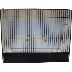 Cage exposition merle noir en PVC