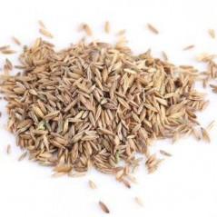 Graines de Laitue Blanche au kg - Grizo