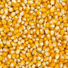 Corn French 20kg - Grizo 104001200 Grizo 11,45 € Ornibird