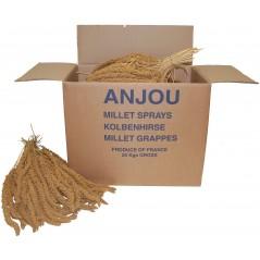 Millet Jaune en grappes Anjou 25kg