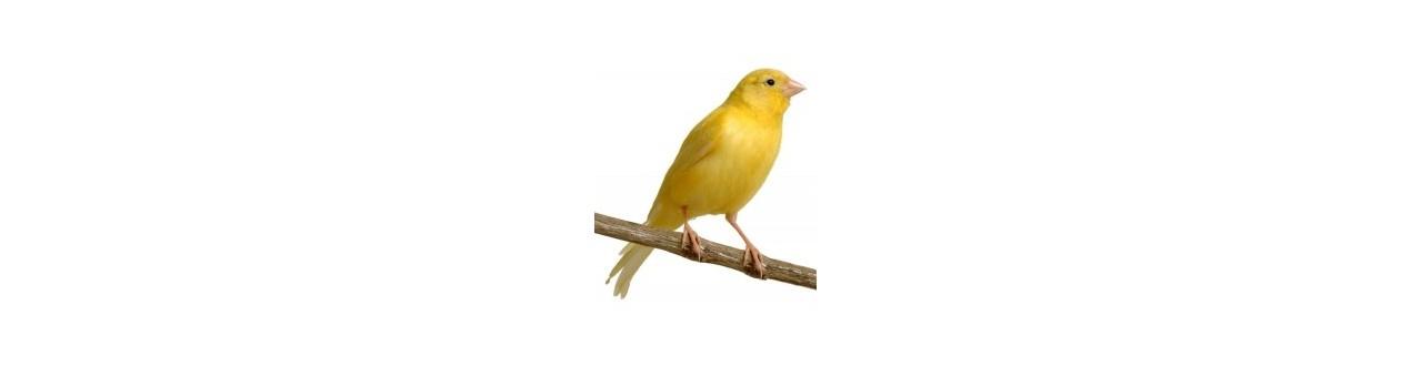 Red Bird - Produits pour oiseaux