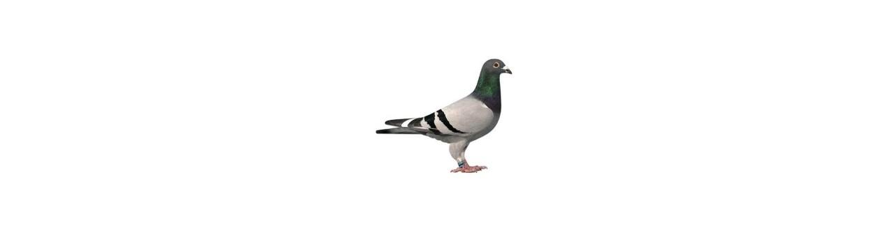 Rode Duif door - Producten voor duiven en vogels)