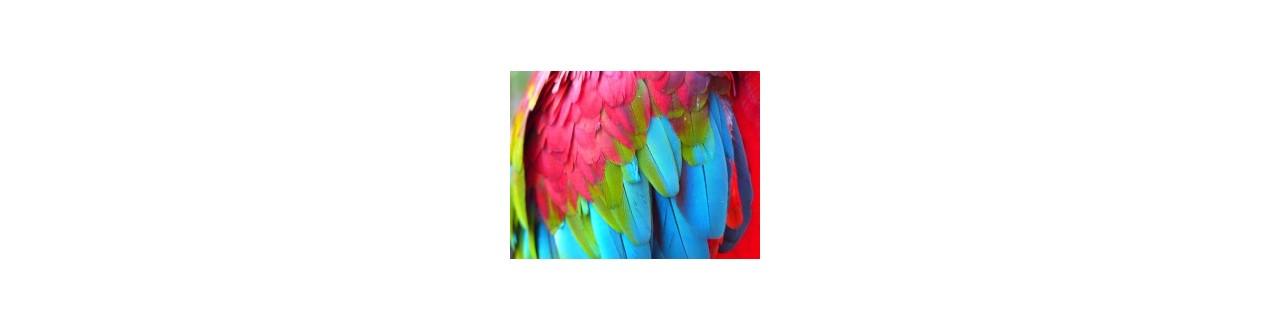 Cuidados com a plumagem