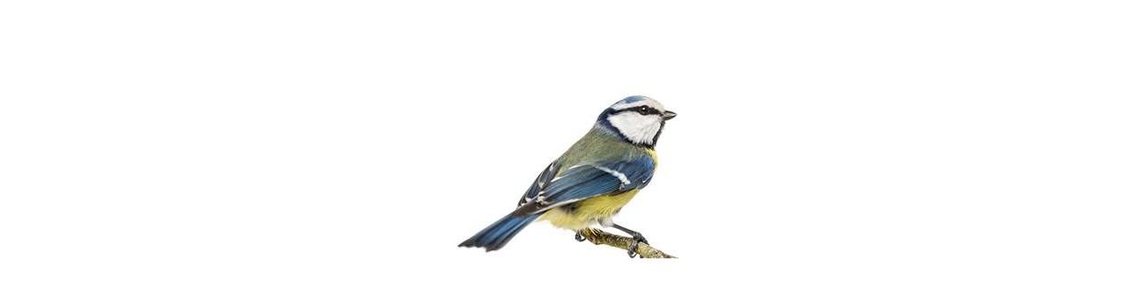 Alimento para as aves e a natureza