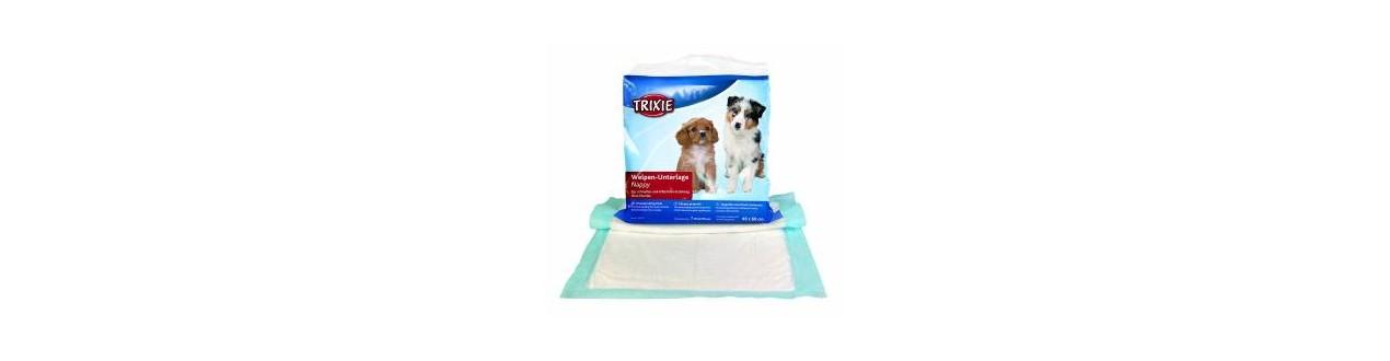 Carpets educator & toilet