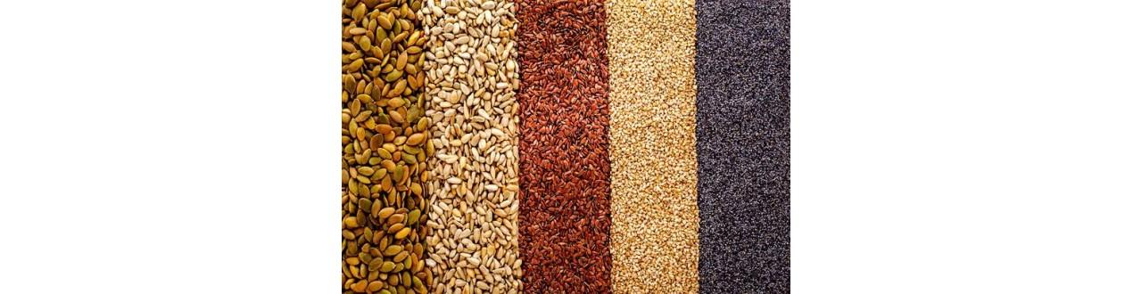 Graines Simples