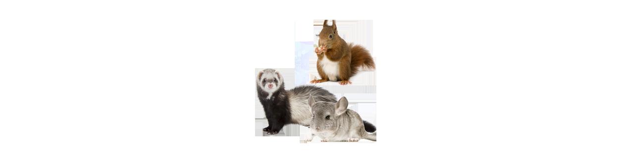 Petit mammifère