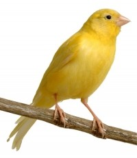 Rode Vogel - Producten voor vogels